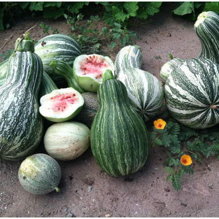 Produce from the garden at the San Carlos Apache Juvenile Rehabilitation and Detention Center includes Navajo melon, Apache squash, cantaloupe and watermelon, among other crops. (Photo by Bryce Barnes, SCAJRDC)