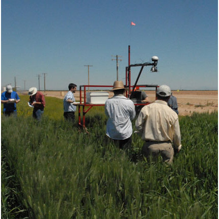 Workshop participants were led through a field data collection exercise at the Maricopa Agricultural Center, using multi-instrument carts and sensors to assess crop response to moisture, compare water use, and measure height and temperature. During the four-day workshop, attendees participated in classroom-based lectures and hands-on fieldwork to learn more about the emerging research area of high throughput phenotyping. (Photo courtesy of Kansas State University Research and Extension)