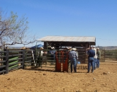 UA Livestock Producer Workshop Responds to Ranchers' Needs
