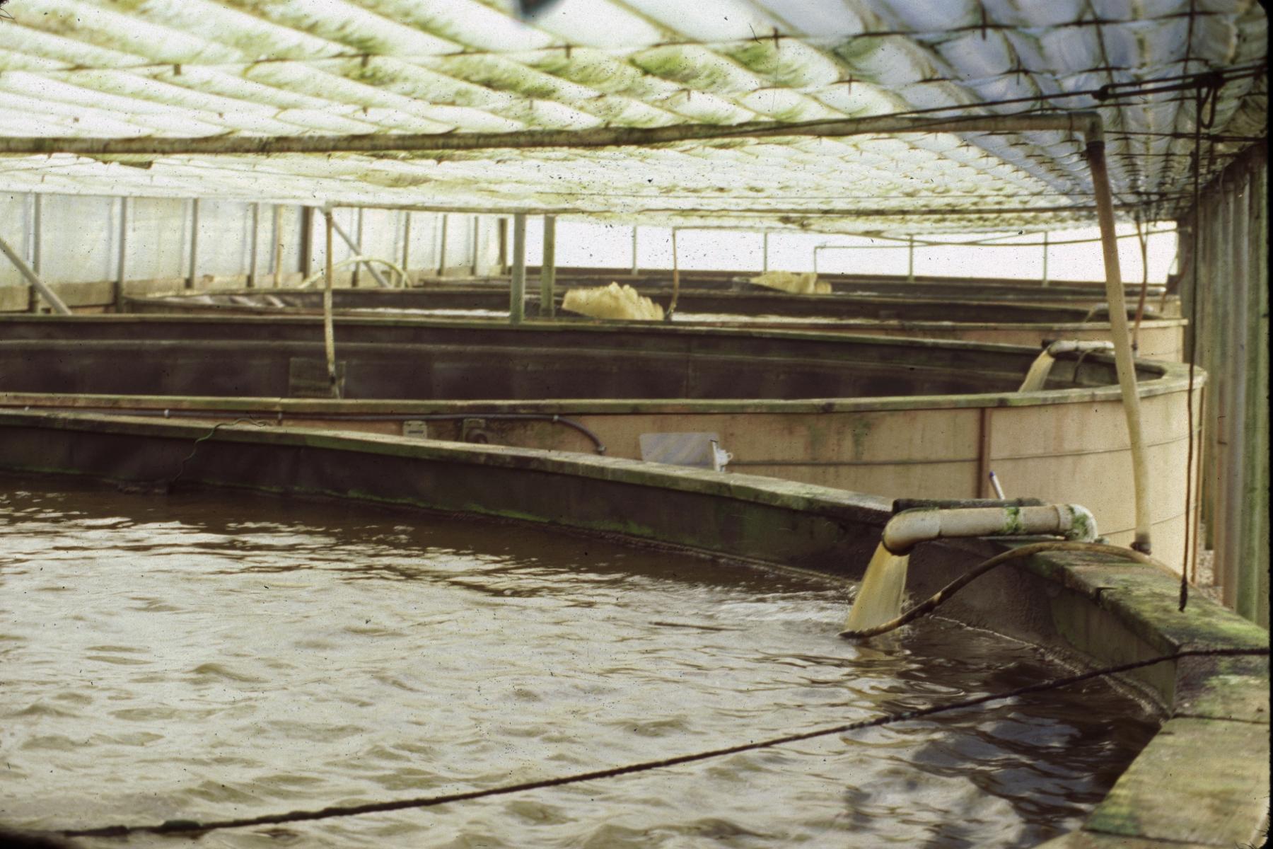 Fish Tanks Inground | Joy Studio Design Gallery - Best Design